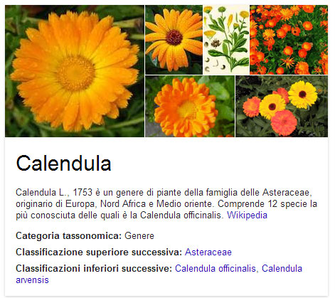 calendula_box